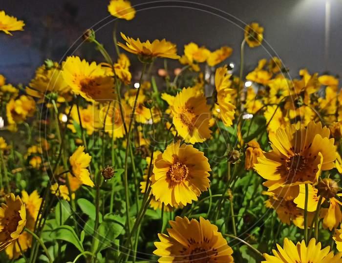 yellow flower garden night view