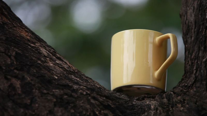 Cup on the tree video by DREAMWORKS