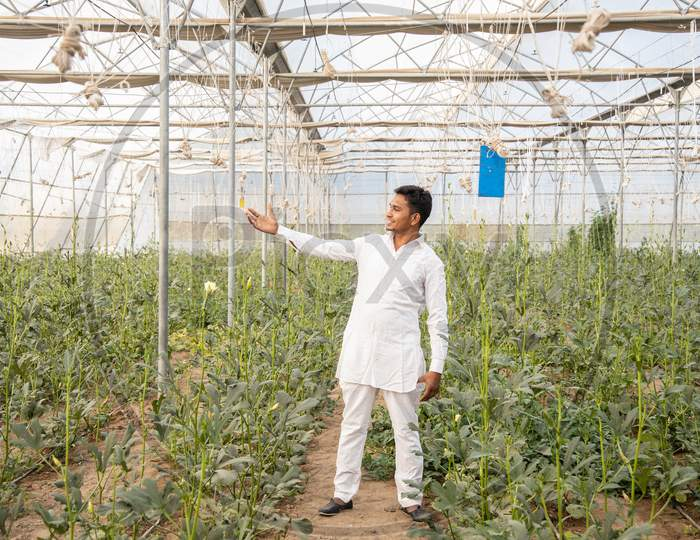 Young Indian Farmer Touch Plant Standing At His Poly House Or Greenhouse, Agriculture Business And Rural Prosperity Concept. Man Wearing White Cloths, Copy Space,