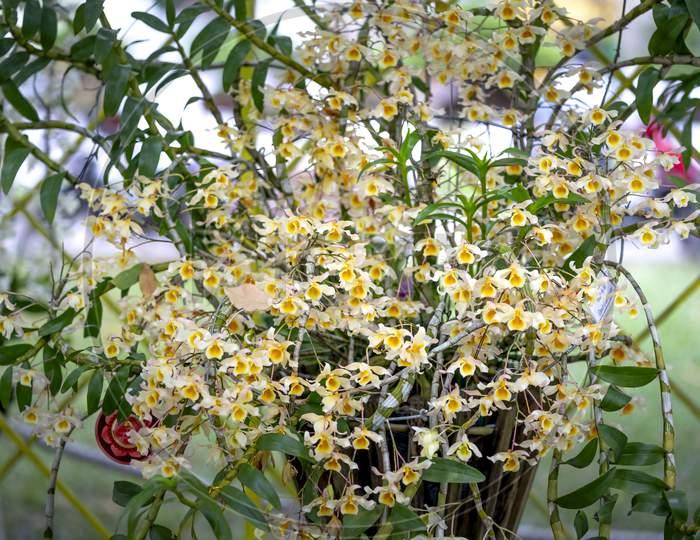 Tropical rainforest orchids. Wild orchid