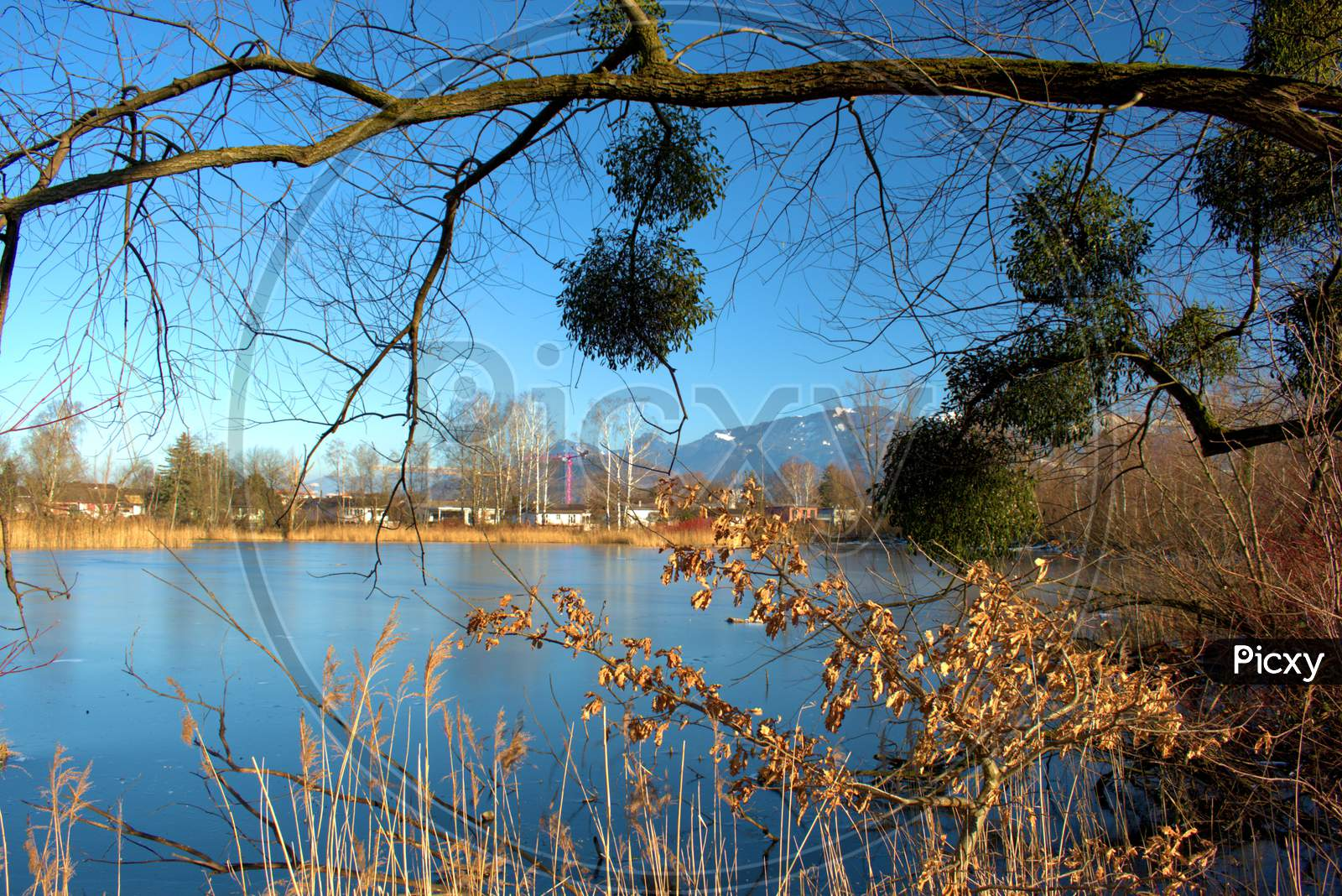 Lovely View Over A Lake In Oberriet In Switzerland 11.1.2021