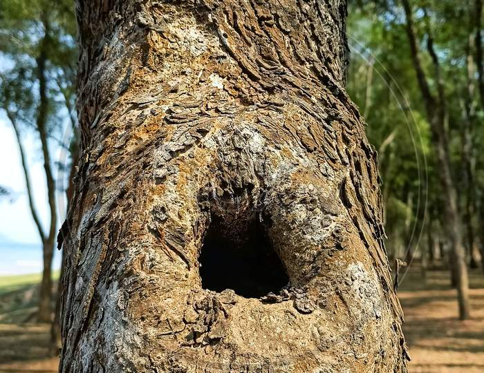 Cave on tree trunk