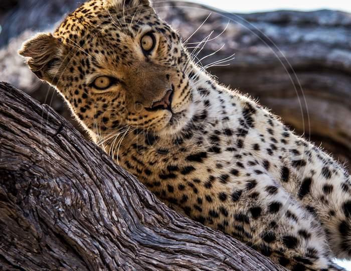 Beautiful pictures of Okavango Delta