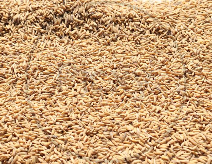Ripe Paddy Stock On Shop For Sell