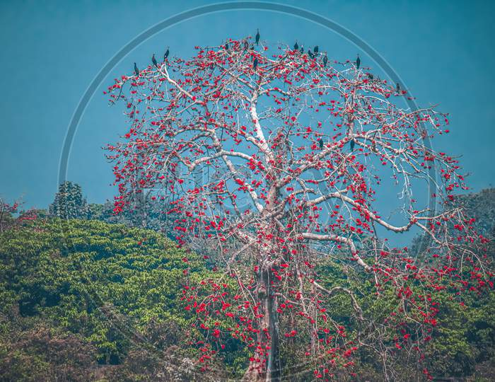 Red Flower Tree Landscape Photography