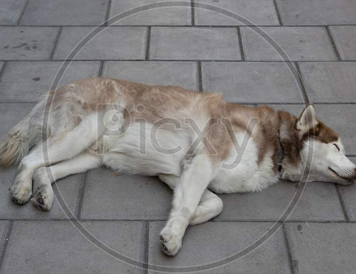 Bristol, Uk - May 14 : Dog Asleep On The Pavement Outside The Grand Hotel In Bristol On May 14, 2019