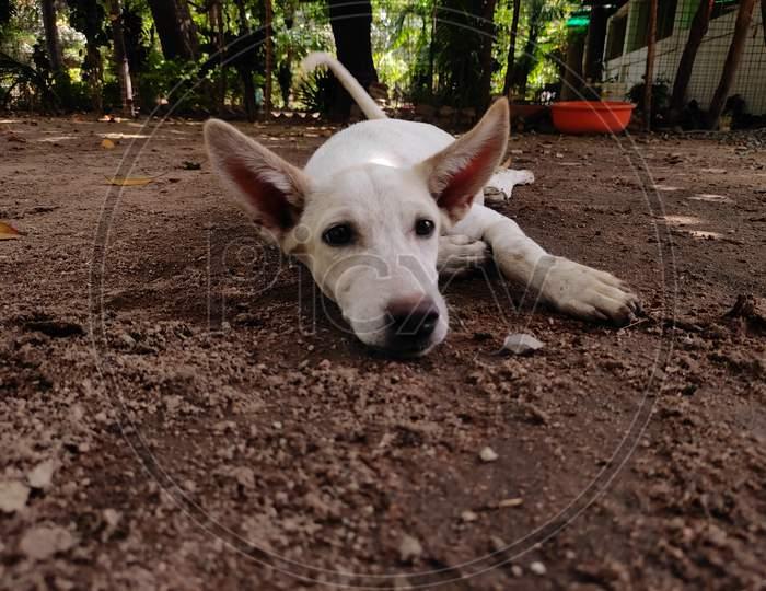 Street white colour dog