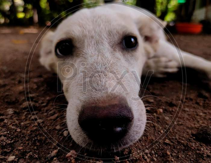 Dog with watery eyes