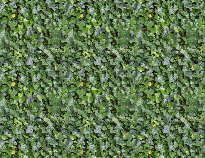 Seamless Green Ivy Texture Background