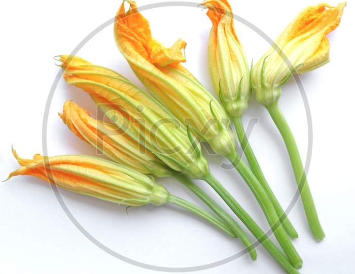 Courgette Zucchini Flowers