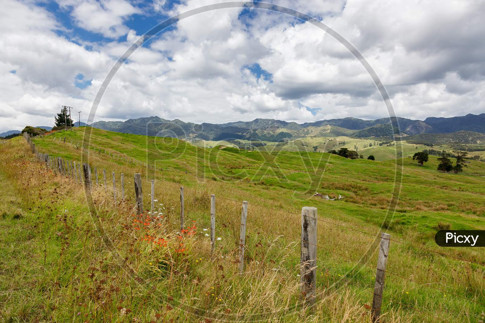 Verdant Undulating Countryside Of The North Island In New Zealand
