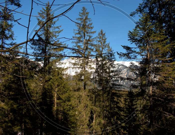 Walking Through A Forest Near Flims In Switzerland 20.2.2021
