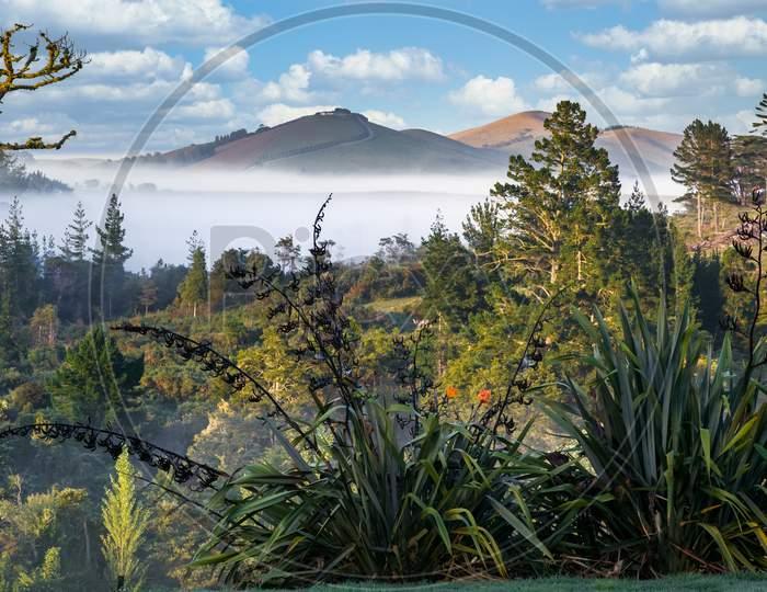 Scenic View Of The Lush And Verdant Matakohe Countryside