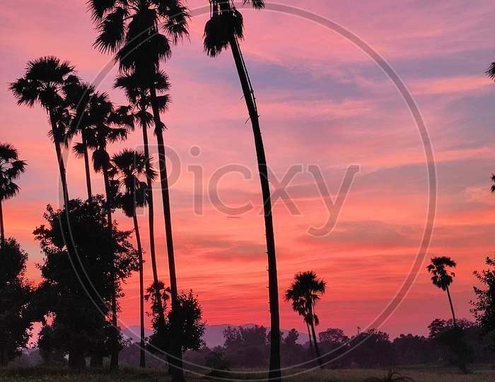 toddy tree sunset