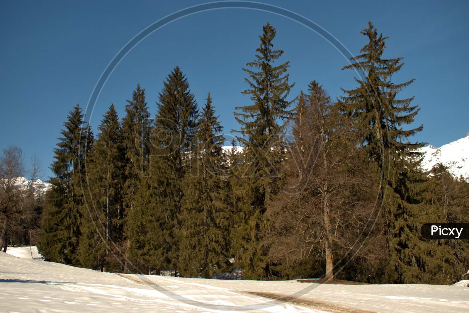 Winter In A Forest Near Flims In Switzerland 20.2.2021