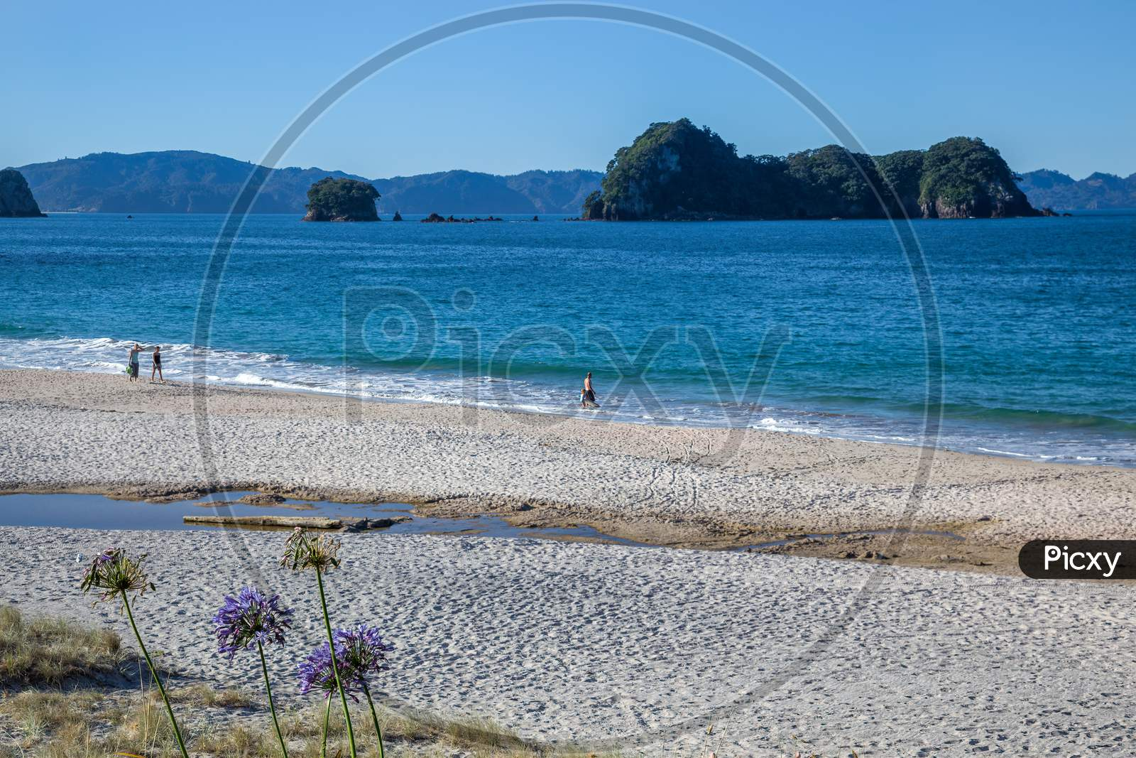 Hahei, New Zealand - February 8 : A Summer Evening At Hahei Beach In New Zealand On February 8, 2012. Four Unidentified People