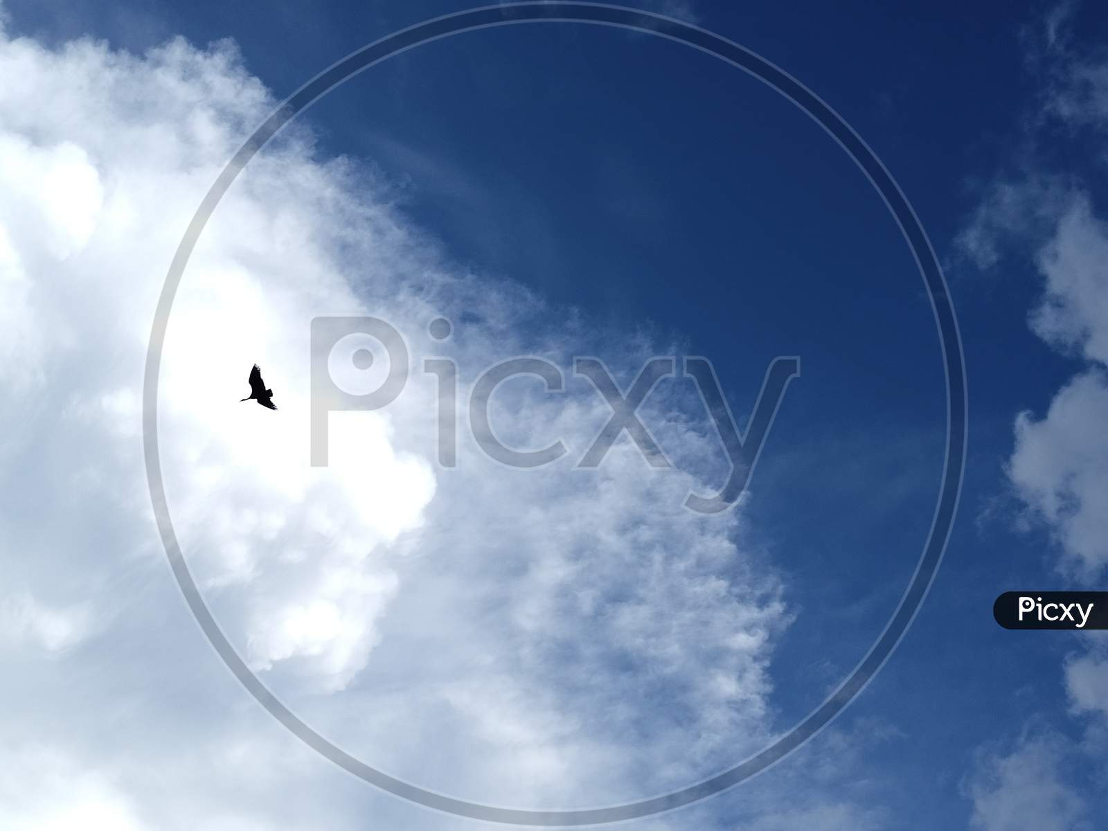 Flying Bird On The Blue Sky With Clouds