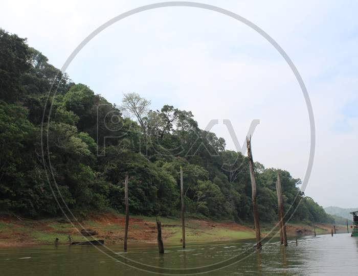 A scenic view of the forest and lake at Periyar National Park, India