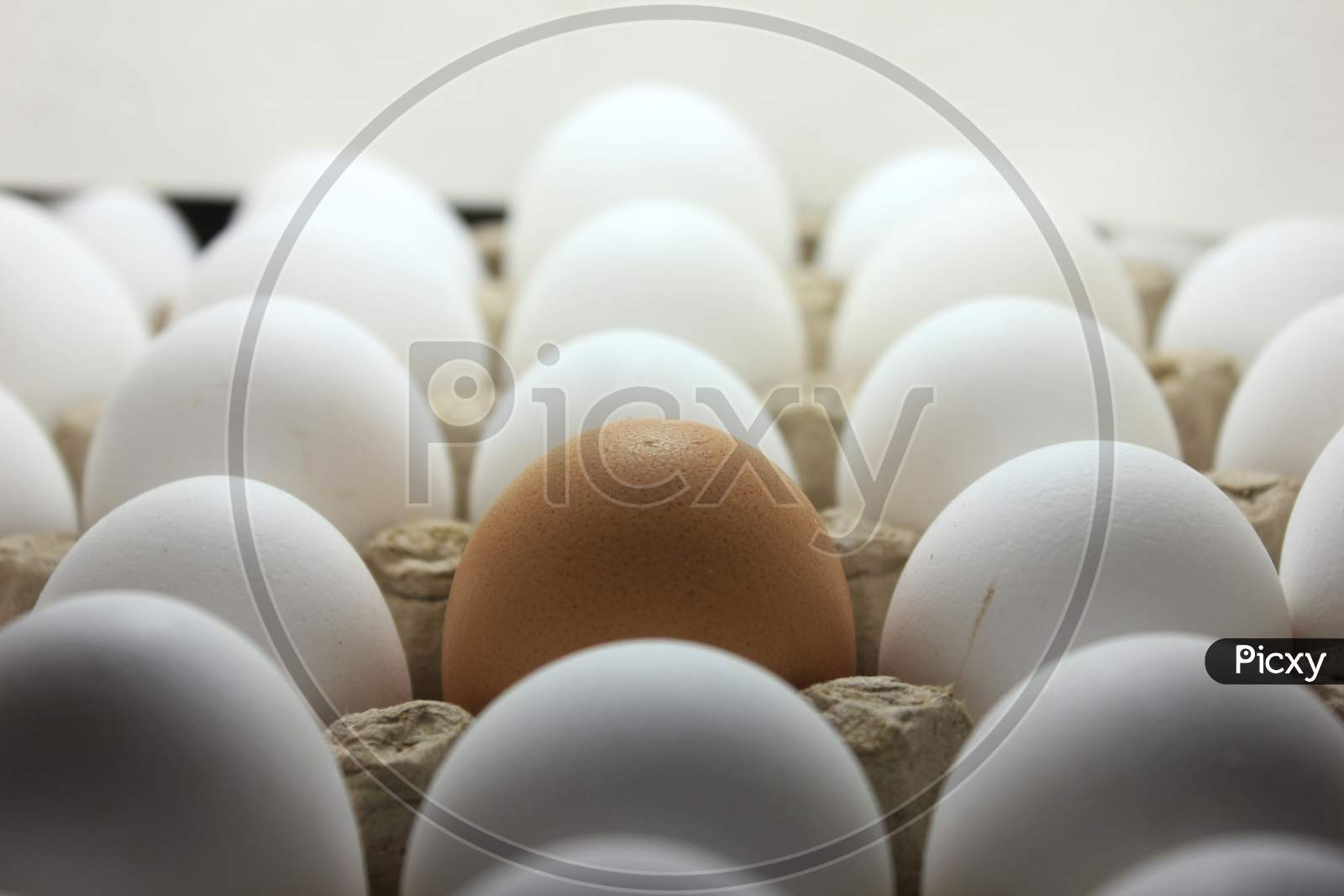 Brown Egg In The Middle Of  The Carton Stock Photo