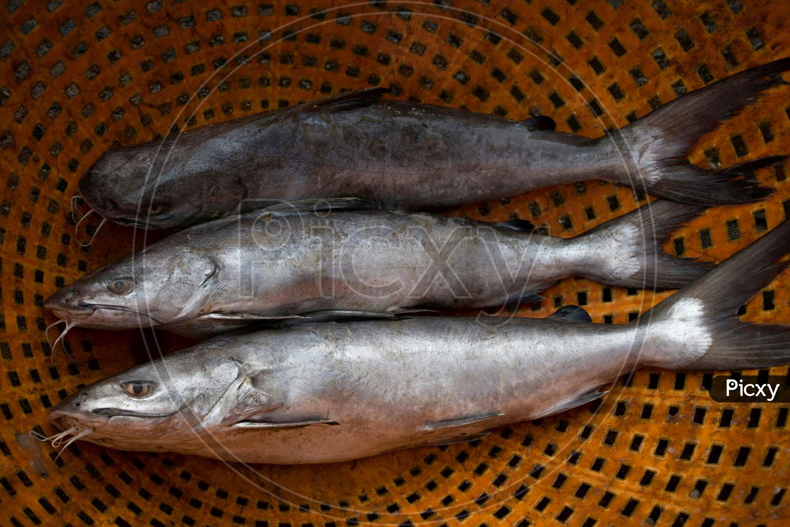 Group Of Silver Catfish For Sale In The Market.