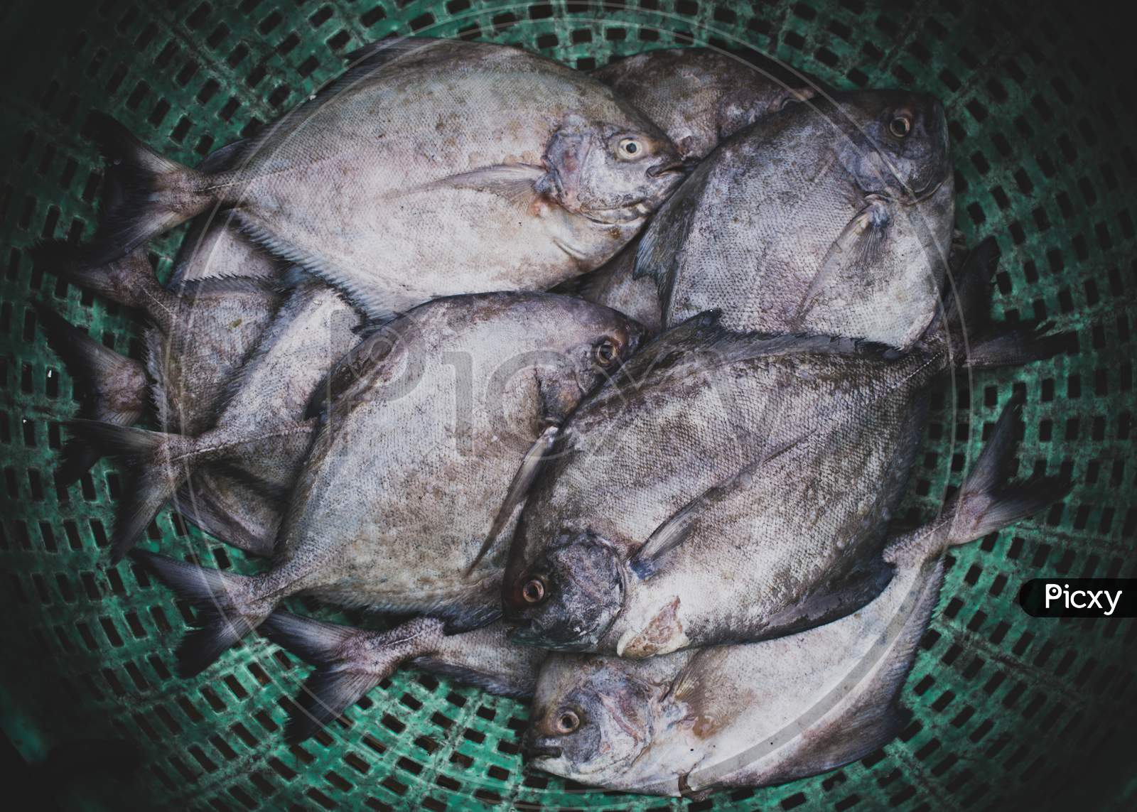 Collection Of Black Pomfret Fish For Sale.
