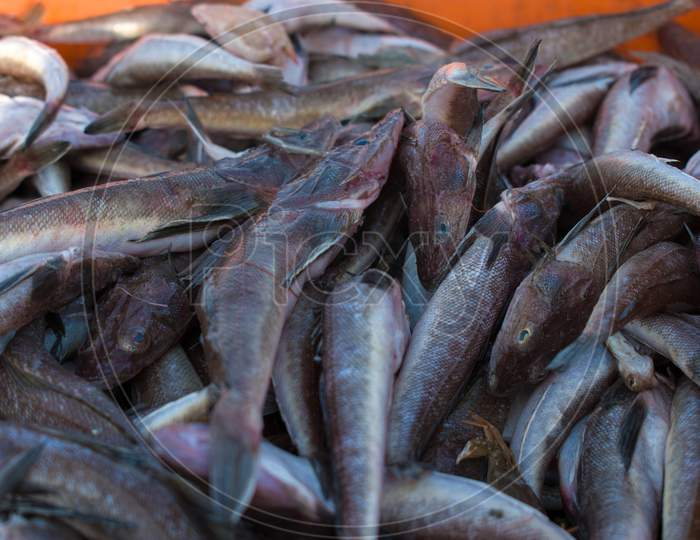 Close Up Shot Of Wanieso Lizard Fish For Sale In The Fish Market.