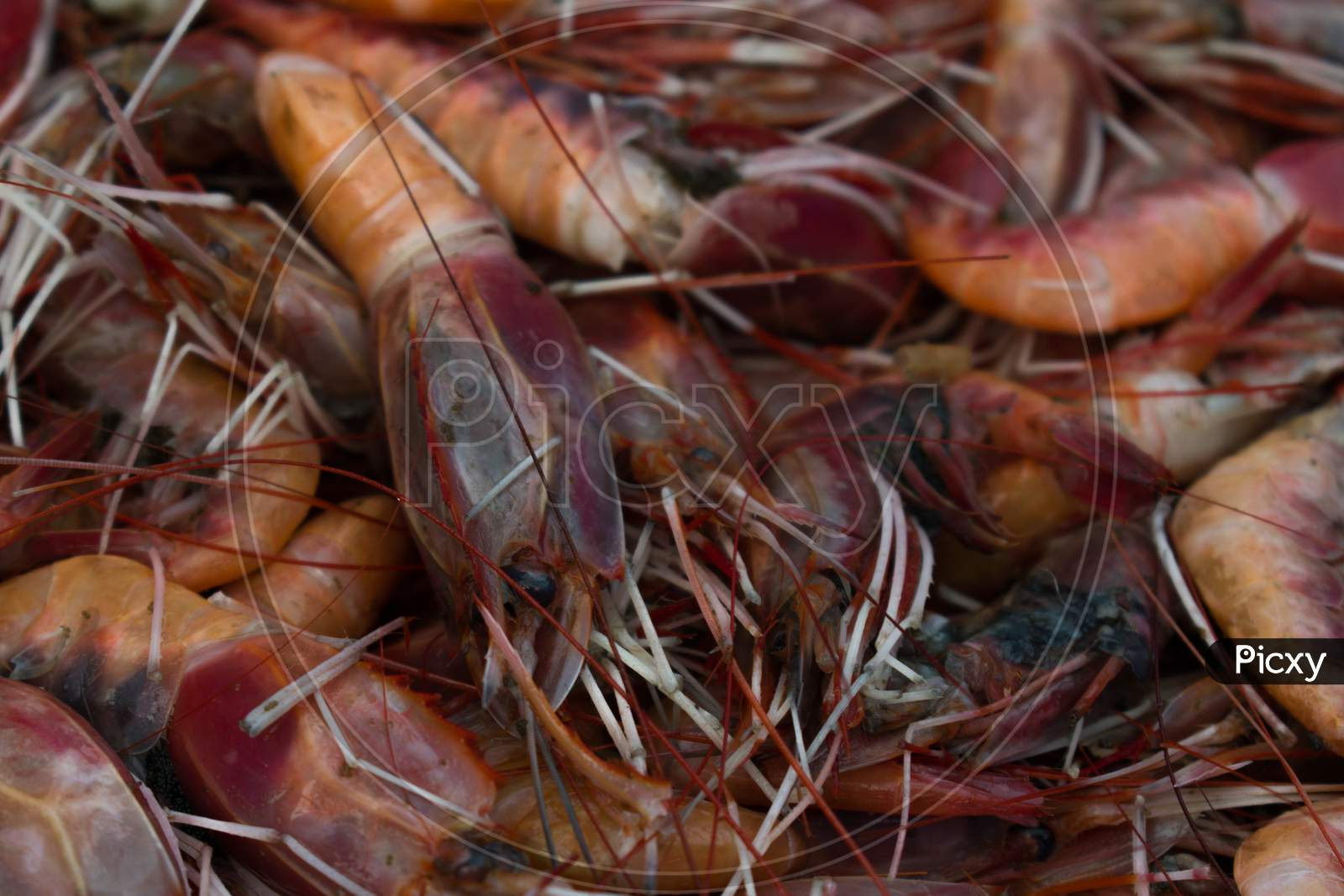 Collection Of Red Prawns Background.