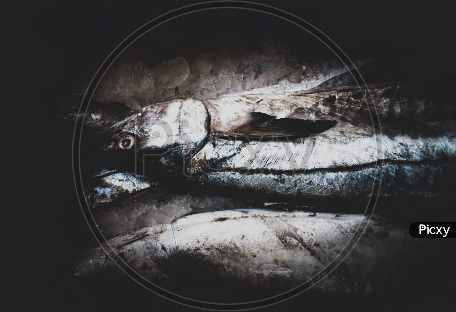 King Mackerel Fish Kept On Ice With Dark Background.