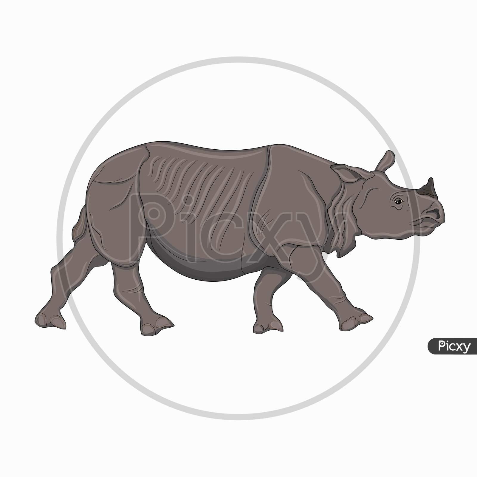 Detailed Illustration Of An Adult Rhinoceros, One-Horned Indian Rhinoceros
