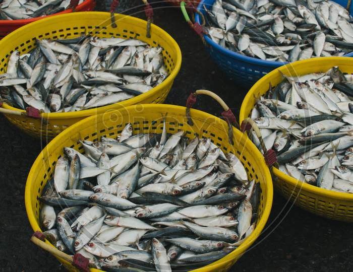 Collection Of Indian Mackerel In A Fish Containers For Sale In The Market.