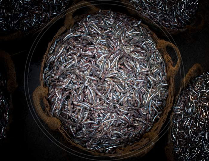 Collection Of Anchoviella Lepidentostole Fish In The Basket For Sale.