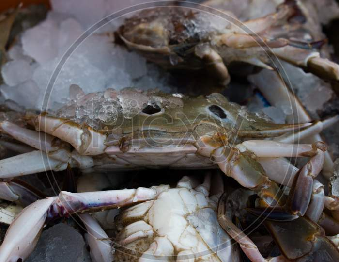 Collection Of Chesapeake Blue Crab On Ice For Sale In The Market.