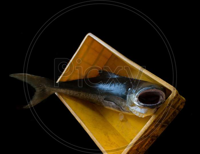 Cobia Fish Opening It'S Mouth In A Fish Container Isolated On Black.