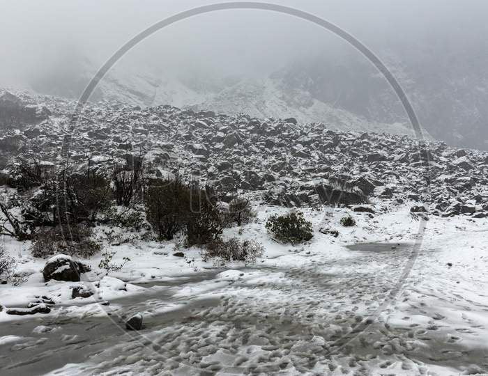 Fresh Snow Onvalley And Trees At Yumthang Valley, Sikkim, India. Selective Focus.