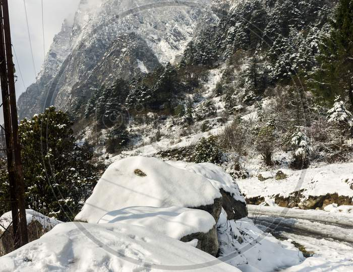 Fresh Snow On Rocks And Beautiful Trees In Background At Yumthang Valley, Sikkim, India.