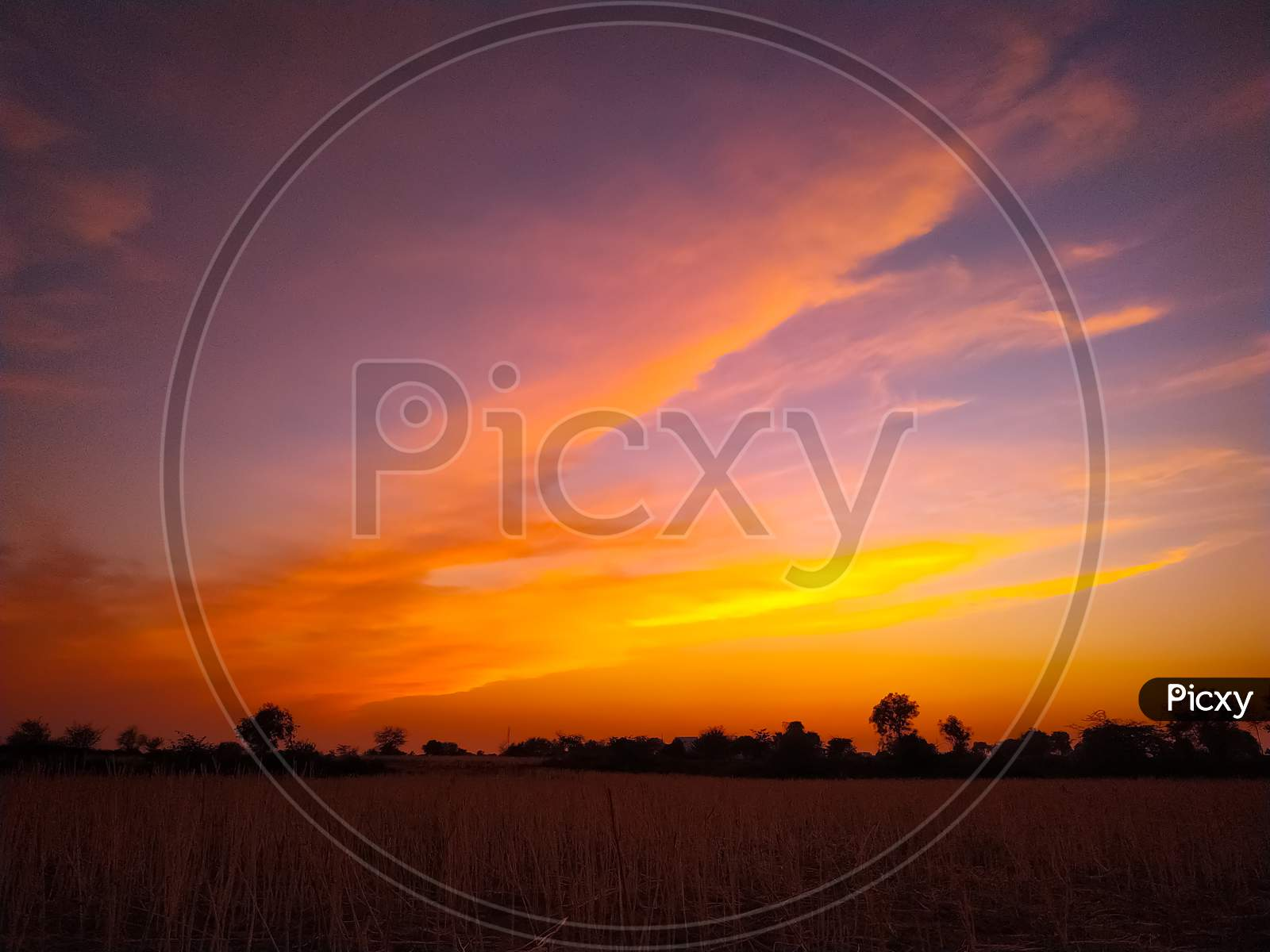 Field Under The Gorgeous Yellow And Pink Sunset Sky