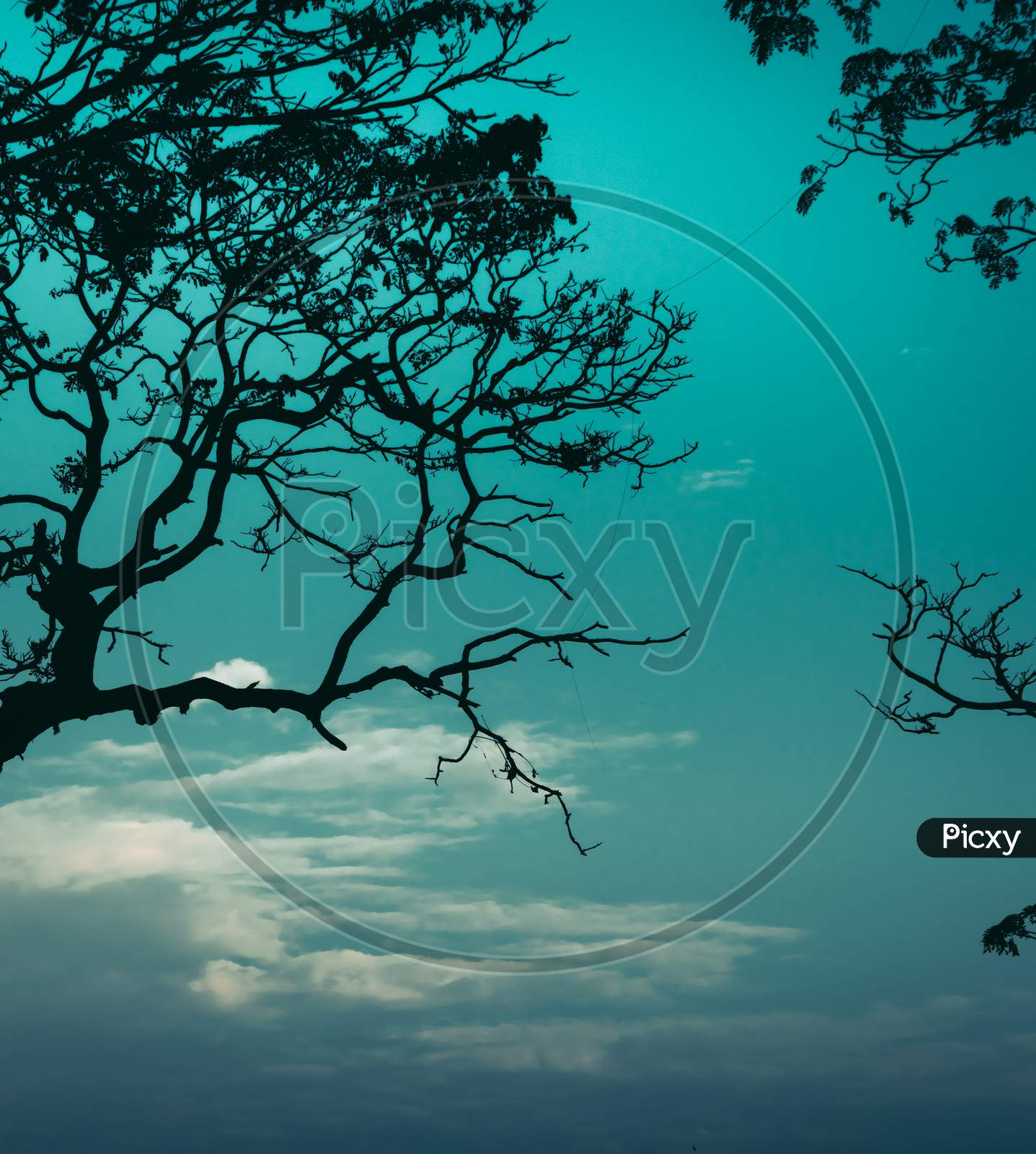 Dark Silhouette Tree Branch And Cool Blueish Tone Evening Sky Photograph