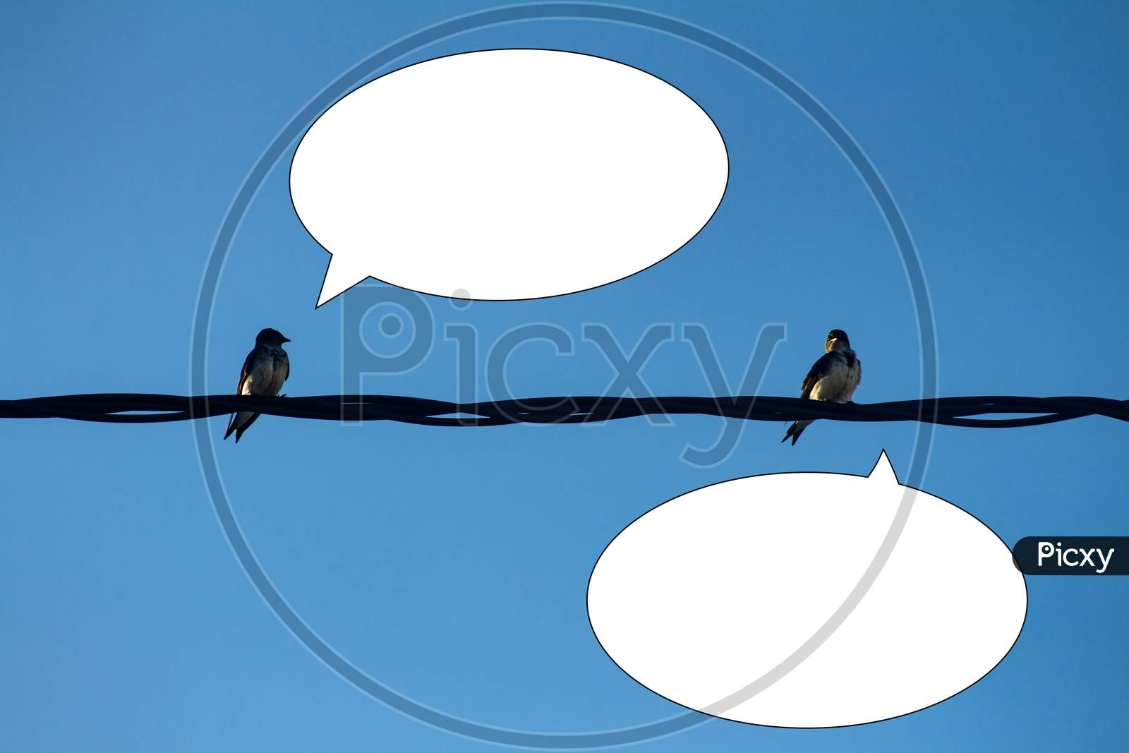 Two Birds Perched On A Wire With White Balloons To Talk.