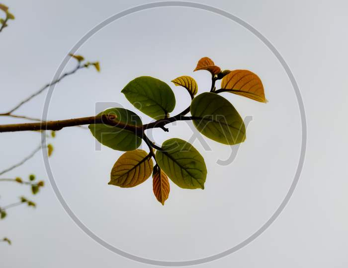 Closeup Shot Of A Tree Branch On A Gloomy Day