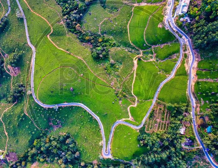 Drone Views of Tea Plantations in Munnar of Idukki District