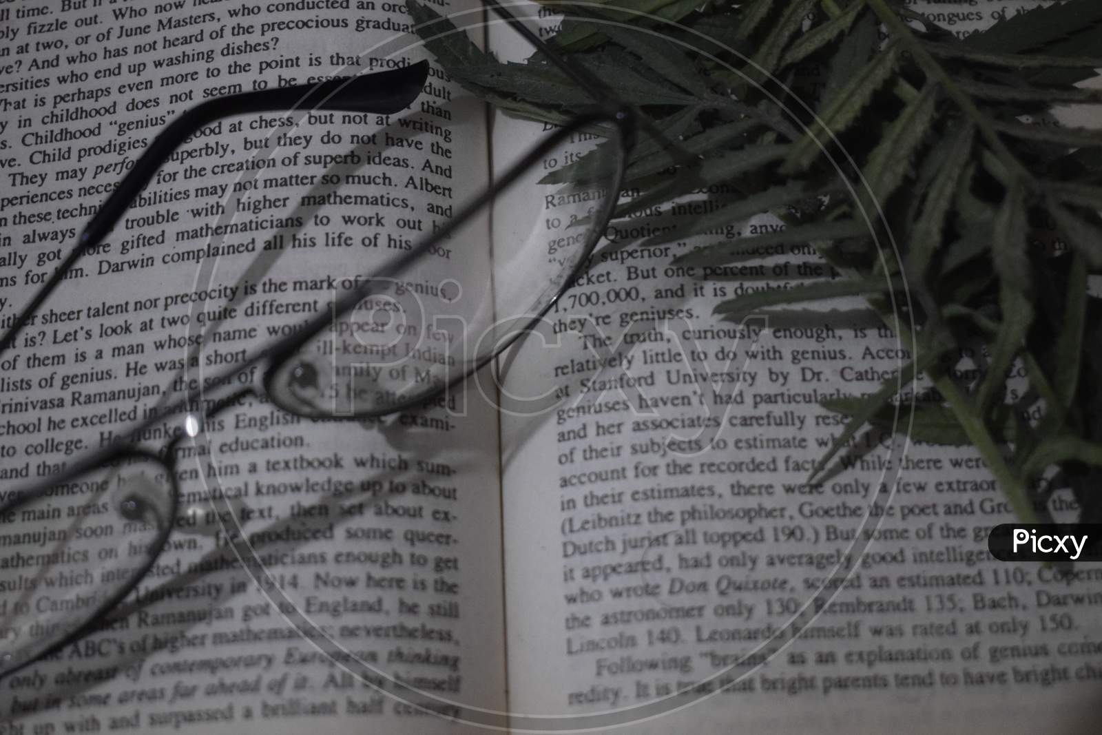 Glasses and leaves on book topview