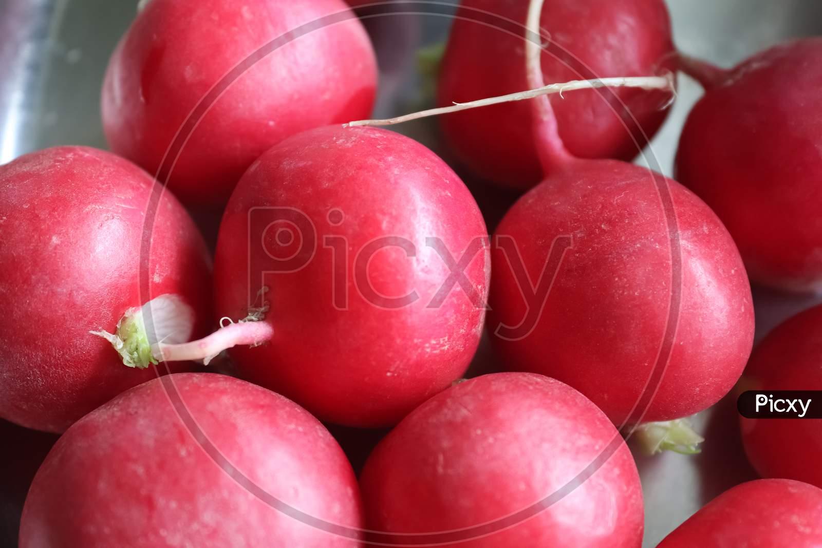 Bunch Of Radishes. Freshly Harvested, Purple Colored Radishes. Growing Rainforests. Growing Vegetables.Healthy Food Background. European Radishes (Raphanus Sativus).