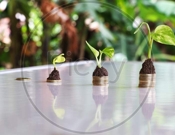 Plant Grow On Money Stacks In A Bokeh Environment . Money Saving And Sustainable Business Investment Idea