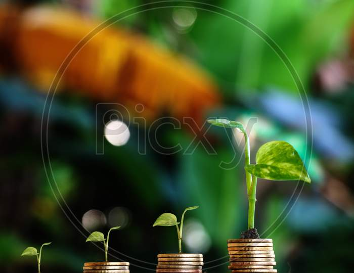 Plant Grow On Money Stacks In An Environment With This Money-Saving And Sustainable Business Investment Idea