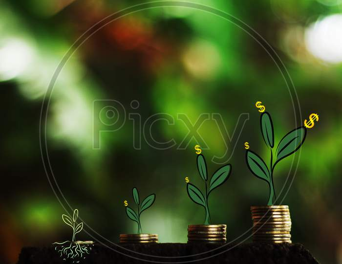 Strong Foundation Money Growth In Soil And Tree Concept